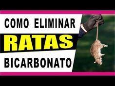 Como Acabar Con Las Ratas En El Jardin Pin De Leonor Alcivar En Disfraces En 2020 Trampas Para Ratones