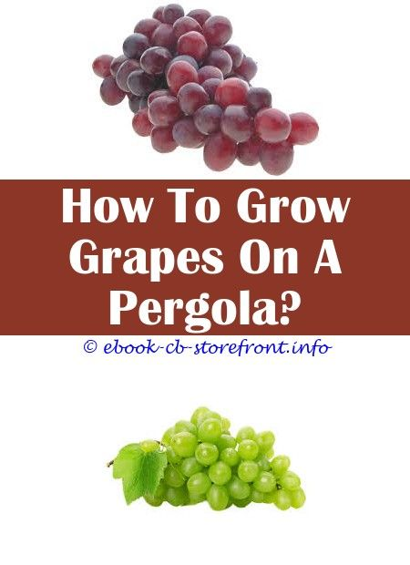 11 Staggering How To Grow Chambourcin Grape Vines Admirable