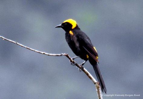 Pin Em Birds