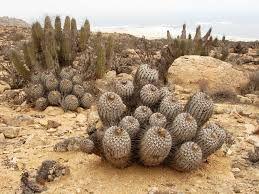 Plantas del desierto o Suculentas Magnifica! | Plantas del desierto, Plantas,  Cactus desierto