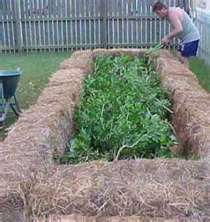 this is how my hay bale garden will look this year. Fresh veggies, can't wait!!
