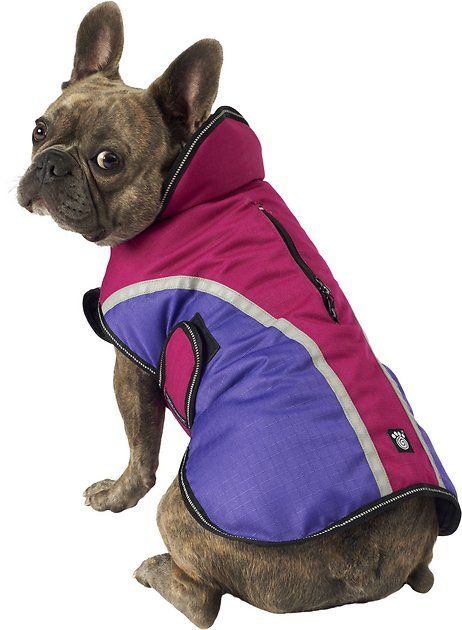 Buy Petrageous Designs Calgary Dog Coat Magenta Medium At Chewy