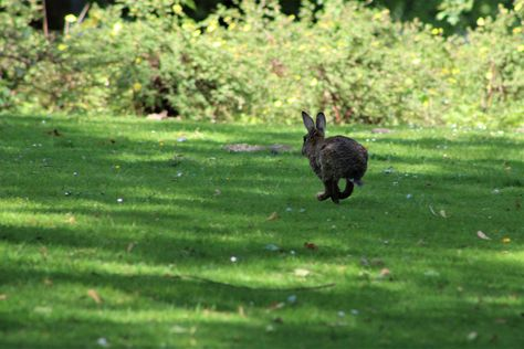 Free Image on Pixabay - Hare, Rabbit, Easter, Animal, Cute