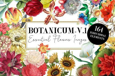Botanicum - V.1 Elements Botanic (223814)   Illustrations   Design Bundles