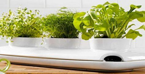 Jardiniere Design Pour Plante Aromatique Dans Cuisine Fancy Avec