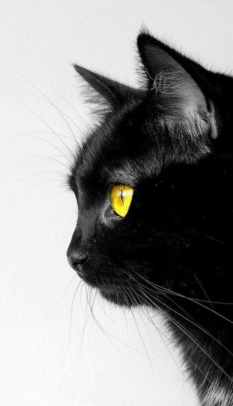 Striking profile with yellow eyes
