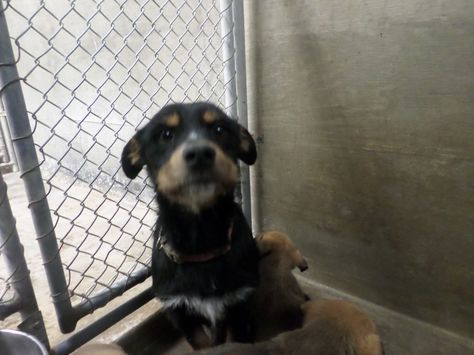 Very High Kill Shelter Please Help Save This Pup From Odessa
