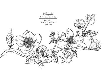Sketch Floral Botany Collection Magnolia Flower Drawings Black And White With Line Art On White Backgrounds Han In 2020 Flower Drawing Floral Botany Magnolia Flower