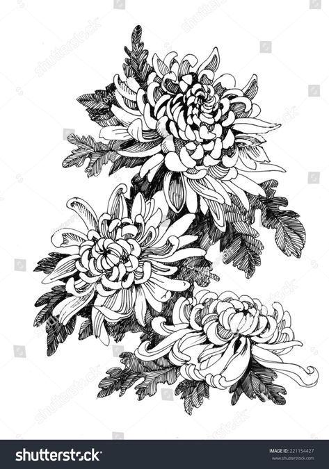 Illustrazione stock 221154427 a tema Hand Drawing Chrysanthemum Flower Tattoo Sleeve Designs, Flower Tattoo Designs, Sleeve Tattoos, Flower Tattoo Drawings, Chrysanthemum Drawing, Chrysanthemum Flower, Japanese Flower Tattoo, Japanese Flowers, Crysanthemum Tattoo