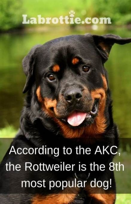 70 Trendy Funny Signs Dogs Puppys Dogs Funny Rottweiler Funny