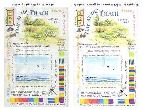 South Carolina LowCountry Nature Journaling and Art: Nature Journaling