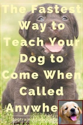House Training A Puppy How Long Does It Take And Sniffer Dog