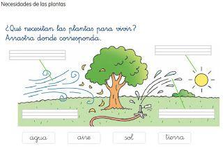 El Blog De Primero 2 Qué Necesitan Las Plantas Para Vivir Actividades De Figuras Geometricas Tipos De Recursos Naturales Plantas