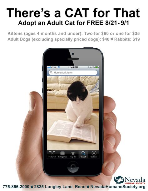 Need A Homework Buddy Someone To Keep You On Track We Mean There S A Cat For That Adult Dogs Humane Society Adoption