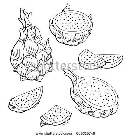 Pitaya Dragon Fruit Graphic Black White Isolated Sketch Illustration Vector Dragon Fruit Drawing Dragon Fruit Fruits Drawing