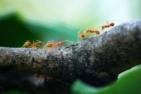 Como Acabar Con Las Hormigas Pin En Aula