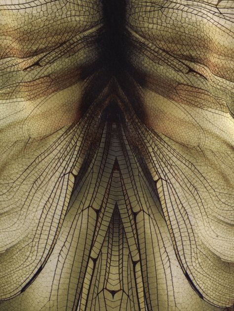 Abstract mirror image focusing on wing structure and pattern