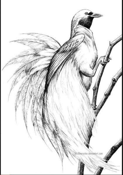 Contoh Gambar Burung : contoh, gambar, burung, Contoh, Gambar, Kartun, Burung-, Kumpulan, Sketsa, Burung, Elang, Hantu, Merpati, Merak, Download, Bu…, Burung,, Kartun,