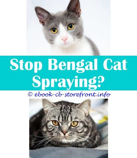 12 Ravishing How To Stop Cats Spraying In My House Admirable