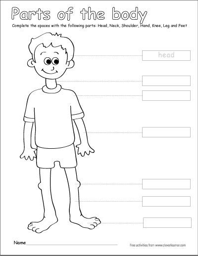 Label The Parts Of The Human Body Free Worksheets For Children