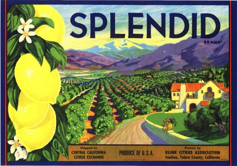 SPLENDID CRATE LABEL VINTAGE BUNGALOW ORCHARD ORIGINAL 1930 CALIFORNIA LANDSCAPE