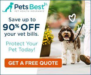 Echocardiogram In Dogs Cardiac Ultrasound Pet Health Pets Pet