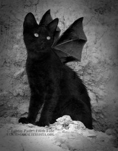 Image Result For Cat With Bat Wings Cute Cats And Dogs Crazy