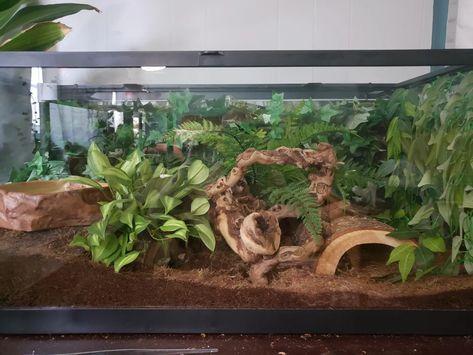 My boys new setup. Leopard Gecko Cage, Leopard Gecko Terrarium, Leopard Gecko Habitat, Snake Terrarium, Fish Tank Terrarium, Terrariums, Reptile Habitat, Reptile House, Reptile Cage