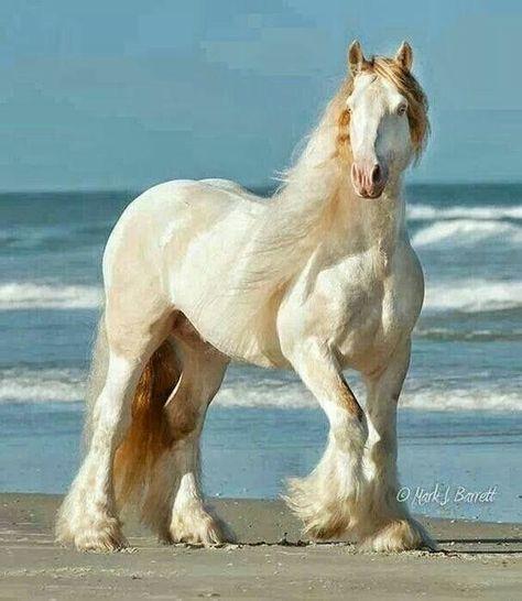 Big Horses, Cute Horses, Pretty Horses, Horse Love, Beautiful Creatures, Animals Beautiful, Cute Animals, Beautiful Cats, Majestic Horse