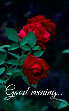 Good Evening Pics Hd Download Good Evening Good Evening Messages Good Evening Wishes