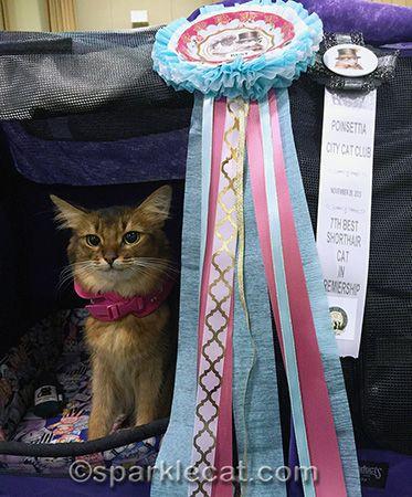 Best Hat Cat Show Cats Cat Behavior Cat Advice