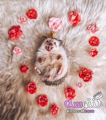 احلى صور عن القنفذ Cute Funny Animals Cute Animals Cute Creatures