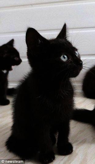 Kitty Kafe Cats In Heat Kitty Cats Singing Cute Cats Baby Cats Fluffy Kittens