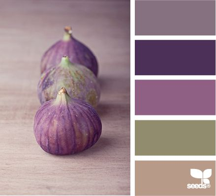 {find the palettes you love}   search by color/value or theme for color palettes  (fig tones)