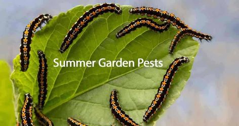 What Are The Most Active Summer Garden Pests? -