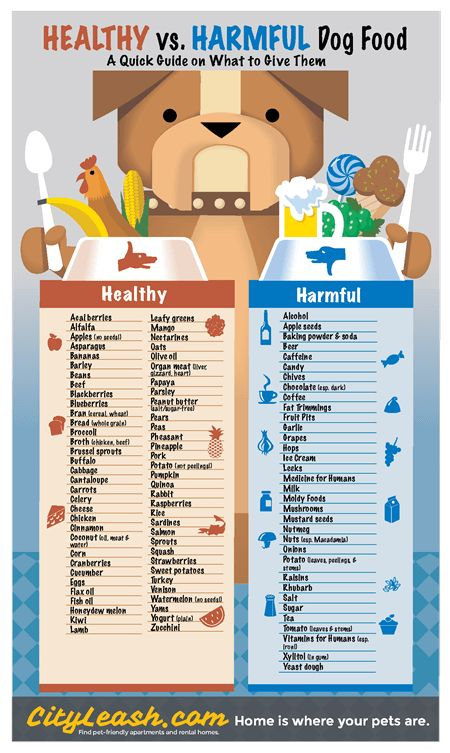 Healthy and Harmful Dog Foods Poster - CityLeash.com