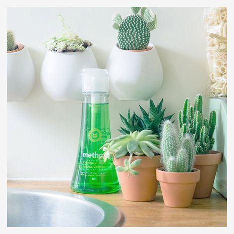 vetplant & cactus
