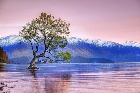 photo Do you think this tree ranks...