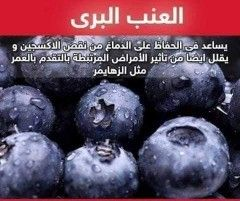 فوائد العنب البري Fruit Healthy Health