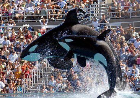 Whale Las Vegas