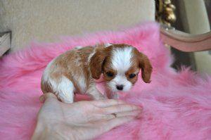 Humane Society Of Bay County In Panama City Florida In 2020 Pet Adoption Pets Humane Society