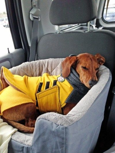 A Car Travel Bed To Keep Your Dog Safe Dog Car Accessories Dog