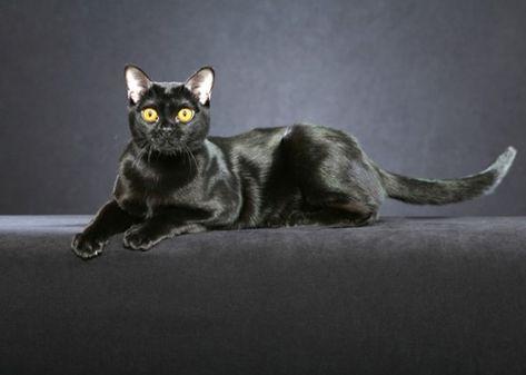 Schwarze Katze Adoptieren Und Sich Als Gluckspilz Zahlen Hubsche