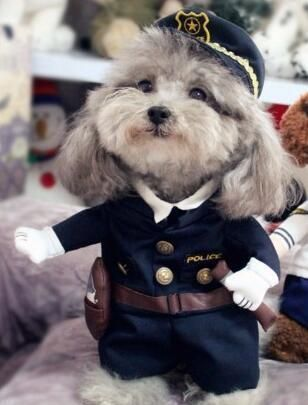 Funny Costumes Puppy Jackets Dog Cat Dogsfunnycostumes