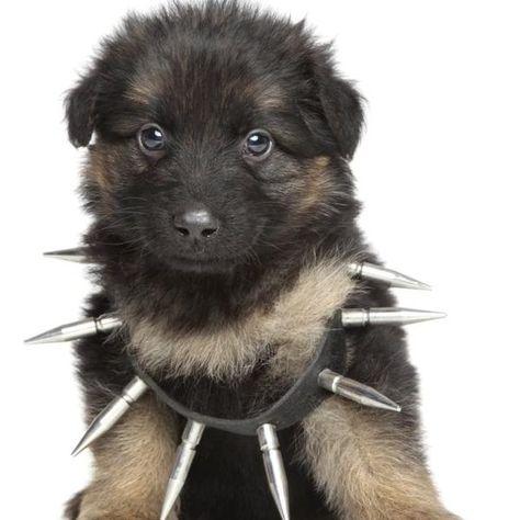 The Best Dog Food For German Shepherds German Shepherd Puppies