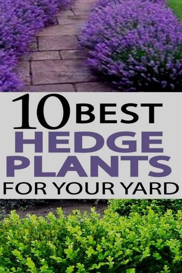 Tips To Improve Your Home Horticulture Experience Garden Hedges