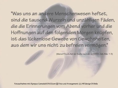 Zitate Von Marcel Proust Aus Auf Der Suche Nach Der