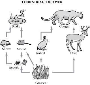 Food Chain Coloring Pages Foodweb2 Gif Laboratorio