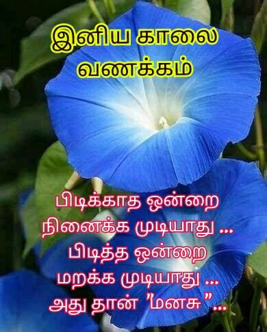 Tamil Quote Good Morning Messages Good Morning Quotes Good Life Quotes