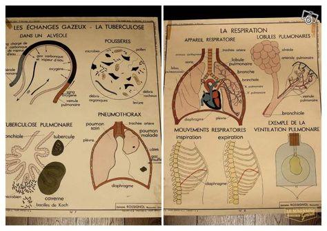 Ancienne Affiche Anatomique Decoration Paris Leboncoin Fr